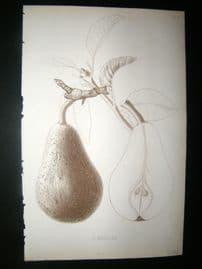 Pomologie de La France C1865 Fruit Print. St. Nicolas, Pear 33