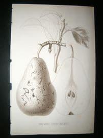 Pomologie de La France C1865 Fruit Print. Van Mons (Leon Leclerc) 29