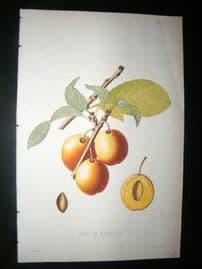 Pomologie de La France C1865 Hand Col Fruit Print. Bleu de Belgique, Plum 27