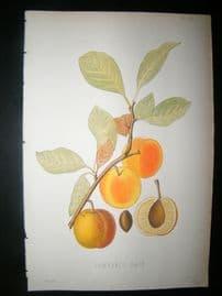 Pomologie de La France C1865 Hand Col Fruit Print. Lawranc's Gage 29