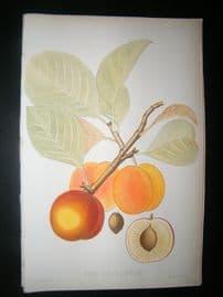 Pomologie de La France C1865 Hand Col Fruit Print. Reine Claude Diaphane, Greengage 25