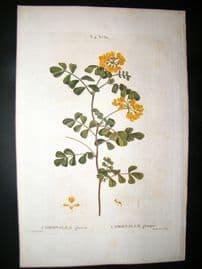 Redoute C1800 Folio Hand Col Botanical Print. Coronilla Glauca