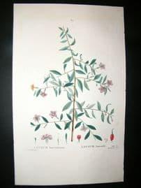 Redoute C1800 Folio Hand Col Botanical Print. Lycium Lanceolatum