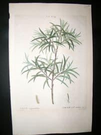 Redoute C1800 Folio Hand Col Botanical Print. Salix Angustifolia