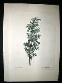 Redoute C1800's Folio Hand Col Botanical Print. Lycium Afrum