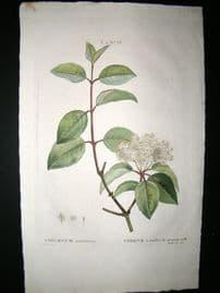 Redoute C1800's Folio Hand Col Botanical Print. Viburnum Prunifolium