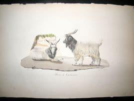 Saint Hilaire & Cuvier C1830 Folio Hand Colored Print. Cashmere Goat