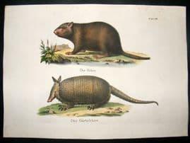 Schinz 1845 Antique Hand Col Print. Beaver, Armadillo 33