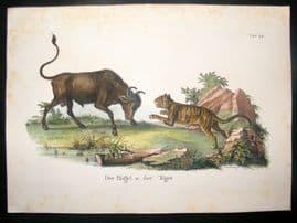 Schinz 1845 Antique Hand Col Print. Buffalo & Tiger 22