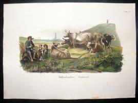 Schinz 1845 Antique Hand Col Print. Dutch Cattle Farmers 72