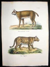 Schinz 1845 Antique Hand Col Print. Lynx, Jaguar 23