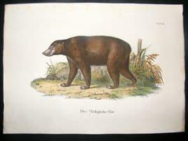 Schinz 1845 Antique Hand Col Print. Malaysian Bear 12