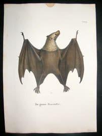 Schinz 1845 Antique Hand Col Print. Rousette Bat 9