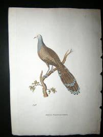 Shaw C1800's Antique Hand Col Bird Print. Argus Polyplectron. Pheasant
