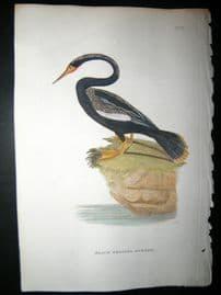 Shaw C1800's Antique Hand Col Bird Print. Black Bellied Darter