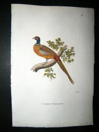 Shaw C1800's Antique Hand Col Bird Print. Common Pheasant