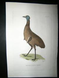 Shaw C1800's Antique Hand Col Bird Print. Dromiceus Emu Australia Native
