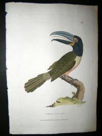 Shaw C1800's Antique Hand Col Bird Print. Green Toucan