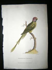Shaw C1800's Antique Hand Col Bird Print. Rose Headed Parakeet