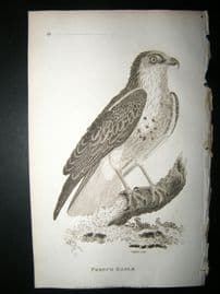 Shaw C1810 Antique Bird Print. French Eagle