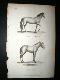 Shaw C1810 Antique Print. Domestic & Wild Horse