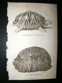Shaw C1810 Antique Print. Geometrical & Radiated Tortoise