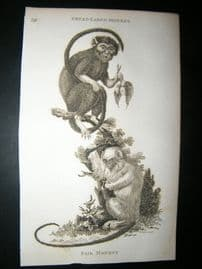 Shaw C1810 Antique Print. Great-Eared & Fair Monkey