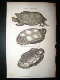 Shaw C1810 Antique Print. Indian Tortoise