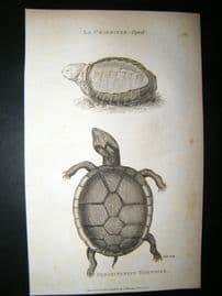 Shaw C1810 Antique Print. La Chagrinee & Pensylvanian Tortoise