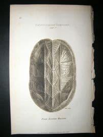 Shaw C1810 Antique Print. Pensylvanian Tortoise