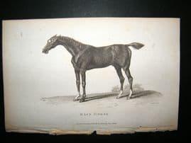 Shaw C1810 Antique Print. Race Horse