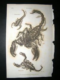 Shaw C1810 Antique Print. Scorpion