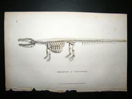 Shaw C1810 Antique Print. Skeleton Of Crocodile