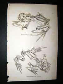 Shaw C1810 Antique Print. Skeleton Of Frog & Toad