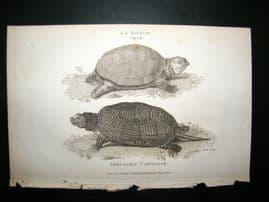 Shaw C1810 Antique Print. Speckled Tortoise