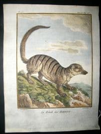 Sonnerat India 1782 Antique Hand Col Print. African Zenik