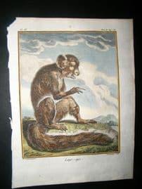 Sonnerat India 1782 Antique Hand Col Print. Aye-Aye