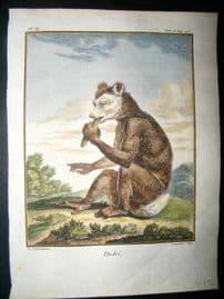 Sonnerat India 1782 Antique Hand Col Print. Indri Lemur