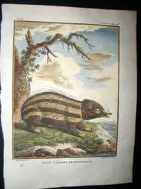 Sonnerat India 1782 Antique Hand Col Print. Madagascar Tandrek