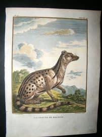 Sonnerat India 1782 Antique Hand Col Print. Malacca Civet