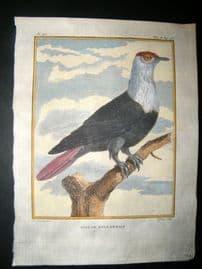Sonnerat India 1782 Antique Hand Col Print. Pigeon
