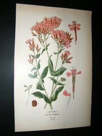 Step 1897 Antique Botanical Print. Catchfly