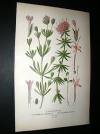 Step 1897 Antique Botanical Print. Crossworts