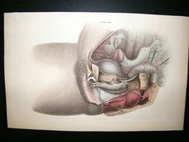 Anatomy Print 1826 Internal Organs. Folio Hand Col.