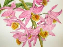 The Orchid Album