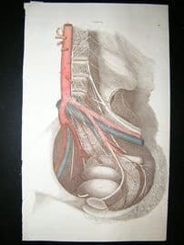 Anatomy Print 1826 Folio Hand Col. Lizars.