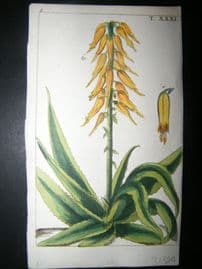 Wilhelm C1790's H/Col Botanical Print. Aloe 8-31