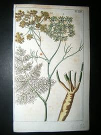 Wilhelm C1790's H/Col Botanical Print. Fennel Plan. Foeniculum vulgare 5-54