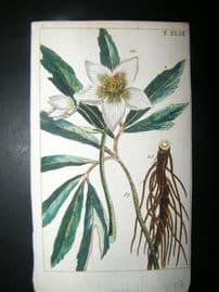 Wilhelm C1790's H/Col Botanical Print. Helloborus Niger 8-49