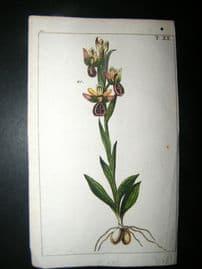 Wilhelm C1790's H/Col Botanical Print. Orchid 10-20